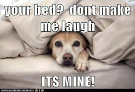Dog In Bed Meme - dog your bed