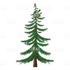 vector single cartoon pine tree on white background stock vector
