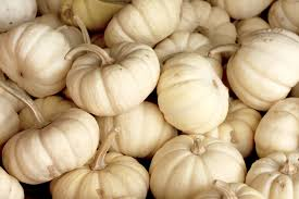 white pumpkins white pumpkins free stock photo domain pictures