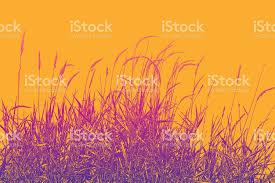 dried ornamental grass stock vector 867422392 istock