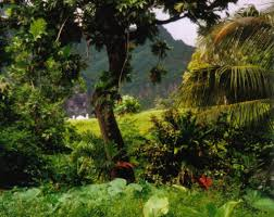 native plants in the tropical rainforest natural and renewable resource the rainforest on fatu hiva