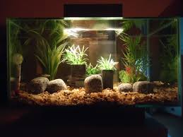 hello from scotland aquarium advice aquarium forum community