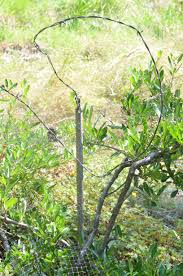 woodbrook native plant nursery deer my own personal jungle