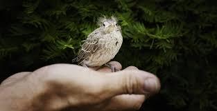 leave a legacy to birdlife birdlife