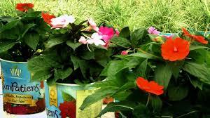 the home depot flower power episode 5 raising vigoro and viva