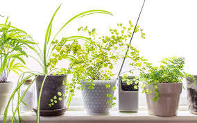 houseplants that need little light 10 low light houseplants to brighten your tiny apartment
