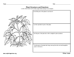 graphic organizer plant structures and functions plants