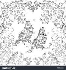 tropical birds coloring book pagezentangle stock vector