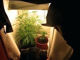 chambre de culture 1m2 armoire de culture chambre de culture complete cannabis interieur