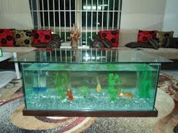 aquarium for sale at a give away price picture inclusive