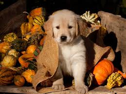 shelter dogs get temporary homes for thanksgiving southern living