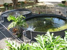 Designing A Backyard Design Your First Backyard Aquaponic Fish Farm Amisy Fish