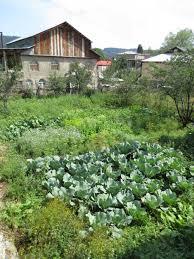 bakuriani bakuriani georgia view of the vegetable garden of a