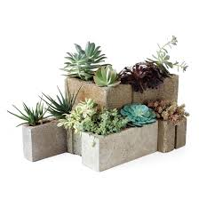 How To Make A Succulent Planter by Modular Succulent Planters Martha Stewart