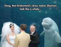 Funny Wedding Memes - image result for funny wedding memes wedding humour pinterest