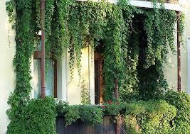 pflanzen als sichtschutz fã r balkon mediterrane pflanzen fr balkon möbel ideen und home design