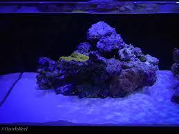 Floating Aquascape Reef2reef Saltwater And Reef Aquarium Forum - ozarksreef rimless mixed reef build thread reef2reef saltwater