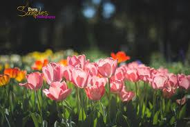spring season officially open kids photography san jose ca