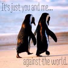 Cute Penguin Meme - 1000 penguin love quotes on pinterest penguin quotes love quotes