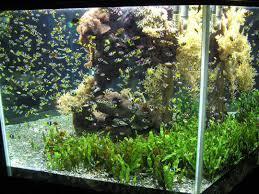 cheap aquarium decoration ideas aytsaid amazing home ideas