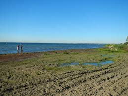 lake st clair lake st noaa and water quality data now available for lake