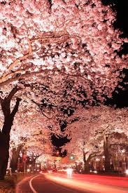 116 best cherry blossom images on pinterest cherry blossom japan
