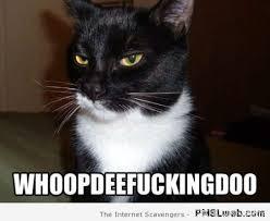 Sarcastic Cat Meme - 36 sarcastic cat meme pmslweb