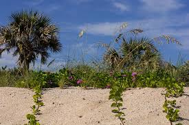Florida vegetaion images Plants on the florida beach photograph by zina stromberg jpg
