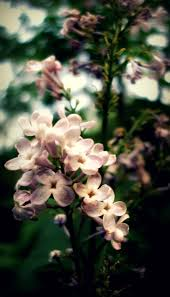 81 best flowers images on pinterest flower spring and beautiful