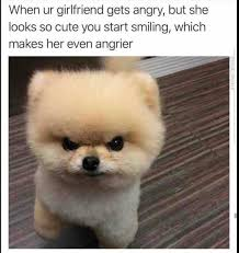 Angry Meme - when your girlfriend gets angry cuteness dog girlfriend