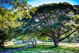 trees city of darwin darwin council northern territory