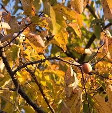 wildlife trees for sale nature nursery
