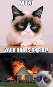 Grump Cat Meme Generator - grumpy cat does not believe meme generator imgflip my personal