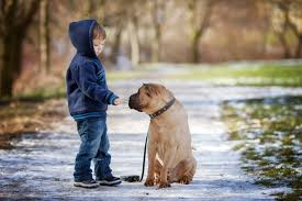 Are All Dogs Colour Blind Dog Facts For Kids Teach The Little Ones To Be Friendly