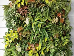 how to plant a living vertical wall garden southern living