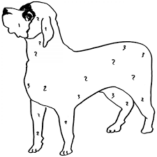 english mastiff dog colouring page to print for preschooler