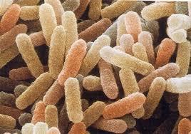 sopravvivenza batterica