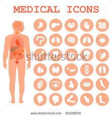 Anatomy Of Human Body Organs Human Body Anatomy Vector Medical Organs Stock Vector 269431466
