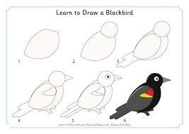 learn to draw a blackbird 460 0 jpg