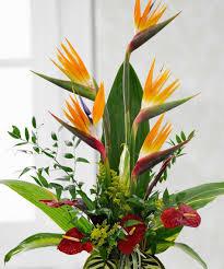 Hawaiian Flowers And Plants - hawaiian garden tropical bagoy u0027s florist u0026 home anchorage alaska