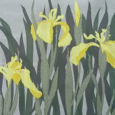 Iris Flag Yellow Flag Iris U2014 Helen Poremba