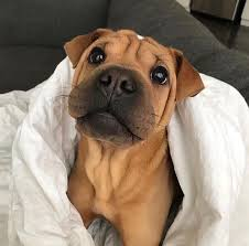 Puppy Dog Eyes Meme - put me like 盞 the power of the puppy dog eyes