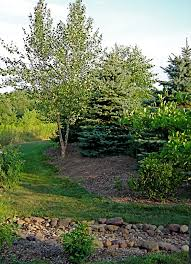 scaping capital front lawn landscaping ideas between neighbors credit