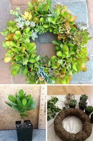 2668 best succulents images on pinterest plants succulents