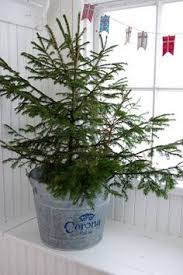 accessories for bath pb small potted pine tree
