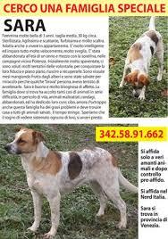 cani in cerca di casa cani in cerca di casa urgente annunci
