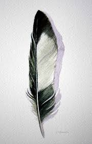 original watercolor feather study 168 magpie feather from