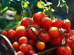 Types Of Patio Tomatoes Tomato Varieties For Your Container Garden Growing Tomatoes In
