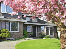 beautiful awesome roses garden front yard contemporary home ideas