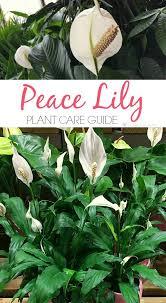 744 best growing houseplants indoor plants images on pinterest